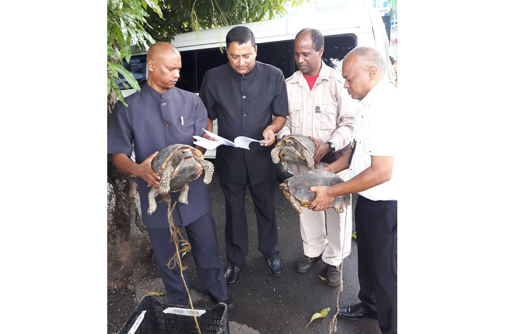 INTERPOL-WCO Operation Thunderball : Yellow footed Tortoises (geochelone Denticulata) being smuggled from Venezuela to Trinidad & Tobago (T&T) were intercepted by T&T Police Game Wardens