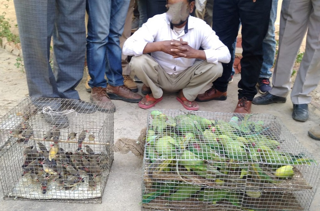 Live Parakeets and Munias (Psittacula eupatria and estrildinae) seized by India's Wildlife Crime Control Bureau during road checkpoint inspections
