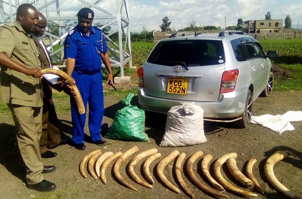 INTERPOL-WCO Operation Thunderball : elephant tusks (Oloxodanta Africana) seized by Kenya Wildlife Service during field patrols