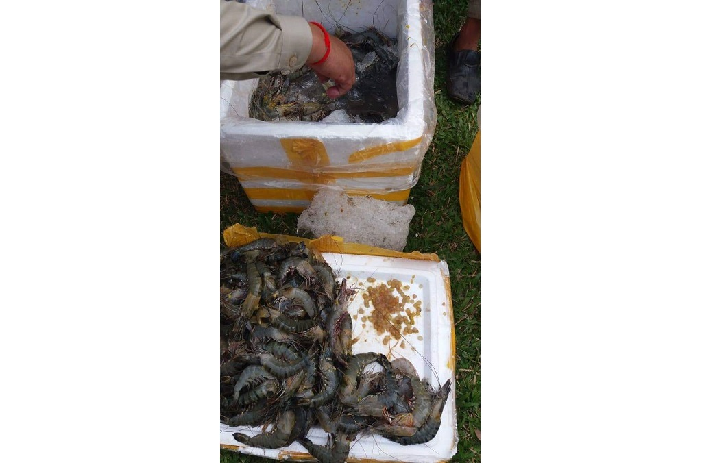 INTERPOL Operation Opson - Authorities in Cambodia recovered potentially dangerous seafood.