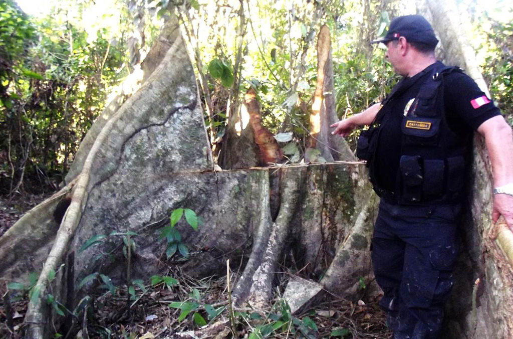 Amazonas operations investigate, arrest and prosecute the criminals and networks involved in the illegal timber trade in Central and South America