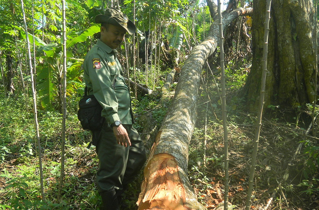 INTERPOL operations focus on every stage of the timber supply chain, from illegal harvest – as attempted here in Indonesia before forestry rangers intervened – to transportation, processing and selling