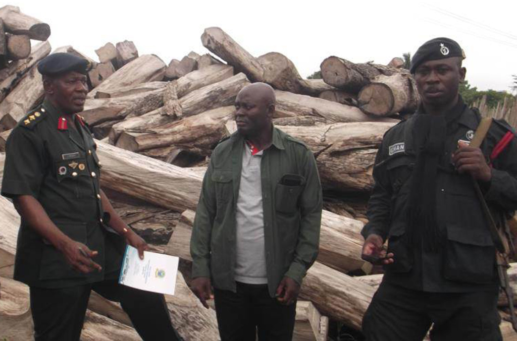 "Operation ""Log"" took place in nine West African countries, uncovering links between timber trafficking and firearms trafficking, wildlife crime and corruption (issuance of fraudulent permits)"