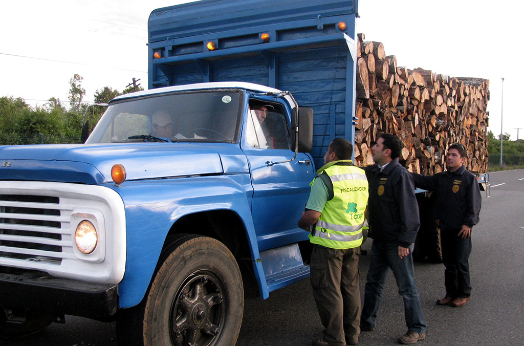INTERPOL operations support law enforcement working across the entire timber supply chain, helping countries to collect intelligence and identify emerging trends