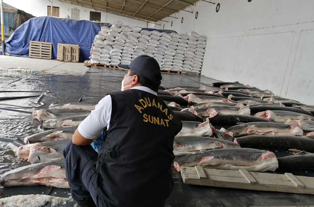 The shipment mainly consisted of protected hammerhead sharks whose fins are highly valued and seen as a delicacy in Asian markets. Courtesy of Peru Customs