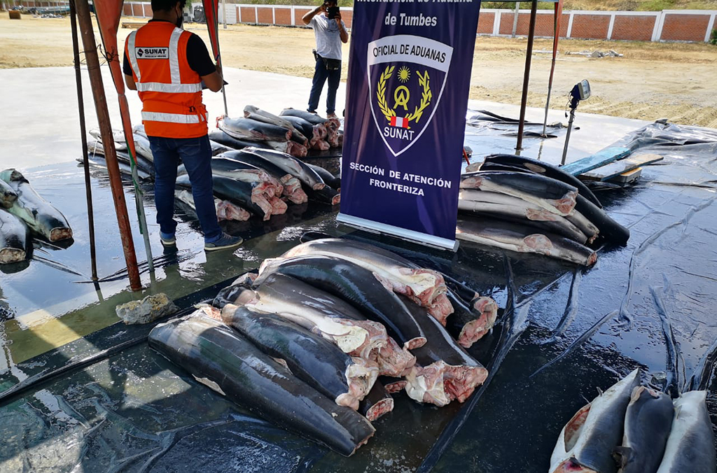 Peruvian police seized a shipment of 11 tonnes of mutilated sharks in the country's north. Courtesy of Peru Customs
