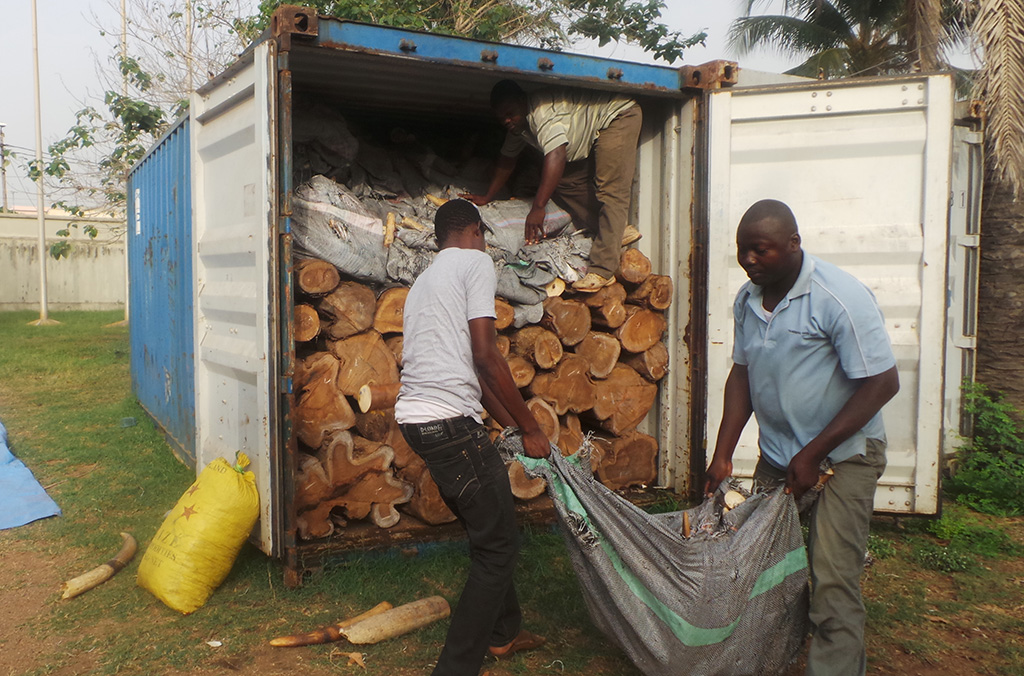 A decade of INTERPOL operations has seen the seizure of more than 1 million m3 illicit timber across Africa, Asia, Europe and the Americas