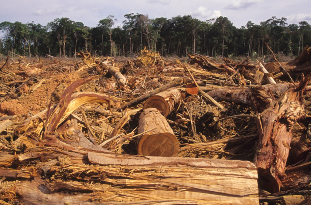 Illegal timber trafficking accounts for up to 90% of tropical deforestation in some countries and causes serious economic, environmental and social damage