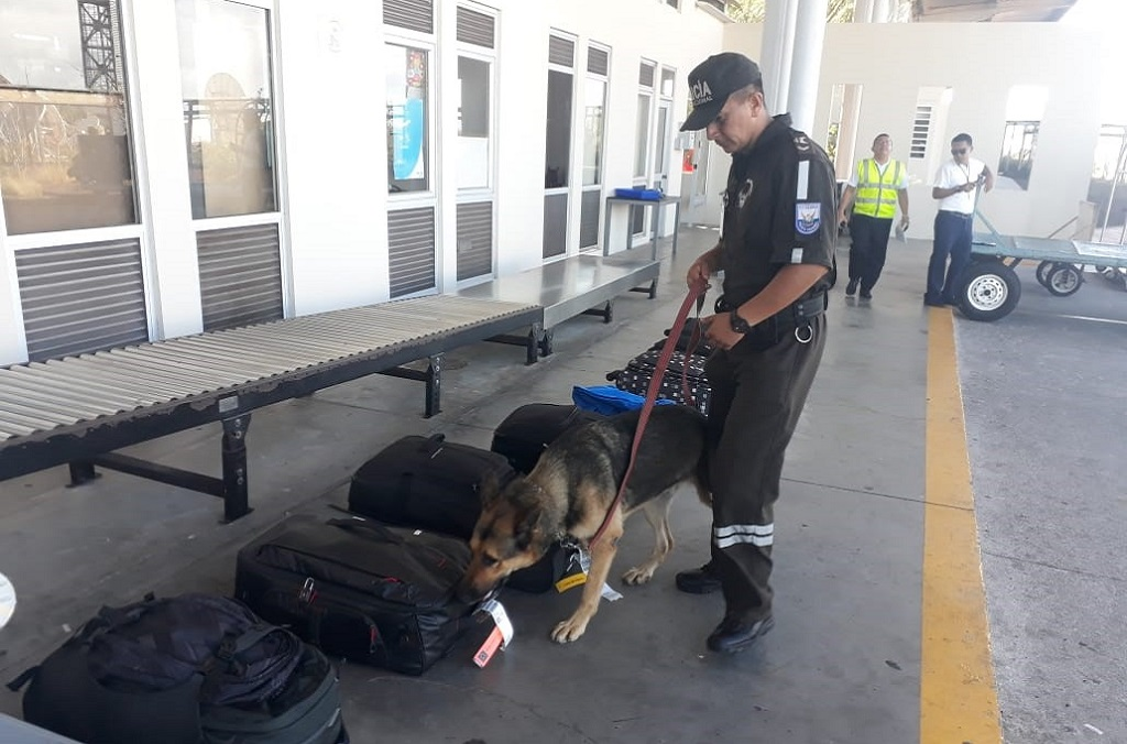 Luggage and cargo suspected of containing protected wildlife were also targeted at land and airport border points with searches often carried out by specialist sniffer dogs such as this one in Ecuador