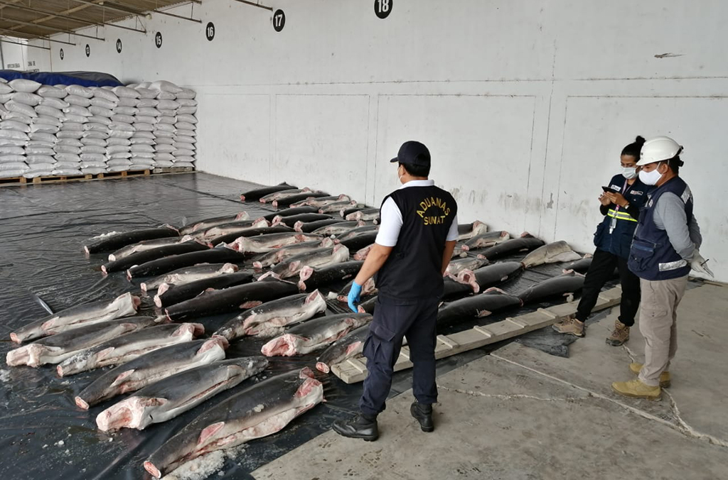 In total, 56,200 kg of marine products were seized during Operation Thunder 2020. Courtesy of Peru Customs