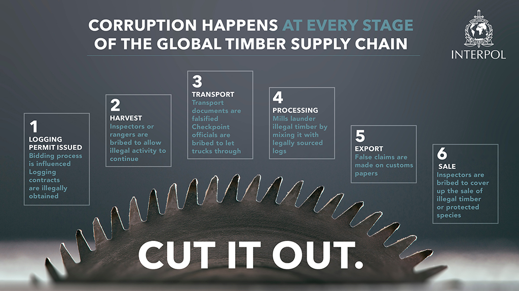 Global Timber Supply Chain
