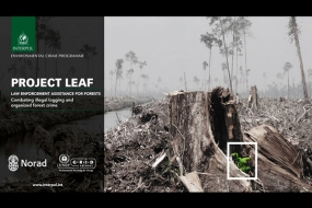 Project LEAF - Combating illegal logging and organised forest crime