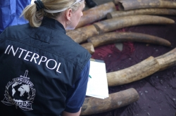 INTERPOL helps police tackle wildlife crime comprehensively, from detection to arrest, investigation and prosecution.