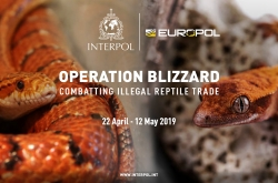 INTERPOL: Targeting the criminals and networks behind this illegal global trade, Operation Blizzard (12 April – 22 May) involved agencies from 22 countries and resulted in seizures ranging from live animals to high-end fashion products.