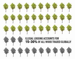 International Forest Day 2018 - Illegal logging