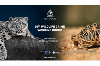 INTERPOL's 30th INTERPOL Wildlife Crime Working Group meeting  looked at how wildlife crime affects industries beyond the environment.