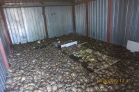 As part of Operation Thunderball in Russia, authorities seized 4,100 Horfield's tortoises (Agrionemys horsfieldii) in a container in transit from Kazakhstan